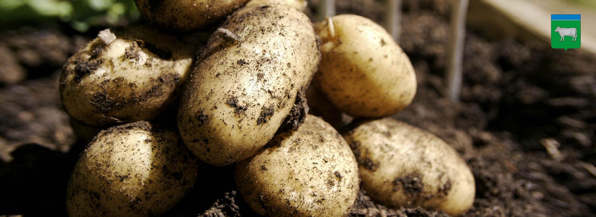 Развитие сельскохозяйственного предприятия (картофель)